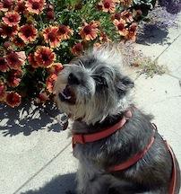 Floral Griffin